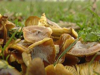 в лесу снова появились грибы